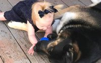 Chó hỗn chiến với kẻ trộm trong lúc chủ nhà đi vắng