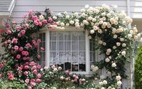 Những ngôi nhà có giàn hoa leo ai đi qua cũng phải ngắm nhìn