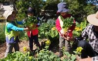 Con đường trồng rau củ cho mọi người hái miễn phí
