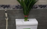 Ra chợ mua liền 5.000 đồng mớ lá này, về treo vào là nhà vệ sinh chỉ có thơm phưng phức
