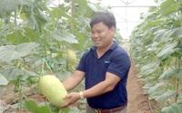 Anh thạc sỹ-nông dân kiếm gần 400 triệu/năm từ trồng dưa an toàn