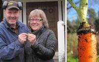 """Đánh rơi nhẫn kim cương khi làm vườn, 13 năm sau người phụ nữ nhận được """"món quà bất ngờ"""""""
