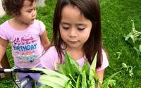 Bà mẹ Việt kiều Canada trồng cả 'rừng' rau, quả ở nơi có thời tiết khắc nghiệt
