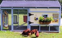 Ngã ngửa vì ngôi nhà nhỏ xinh đẹp như khách sạn lại dành cho… gà vịt
