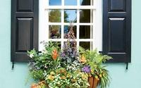 Trang trí cửa sổ xinh lung linh với cách tạo hộp hoa treo đầy hương thơm, màu sắc