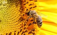 Keo ong David Health – Bí quyết sống khỏe mỗi ngày