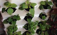 Cách trồng rau sạch trong nhà hẹp
