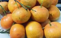 Cách chọn cam Canh ngon, ngọt trăm quả như một