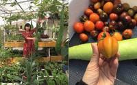 """Cần gì vài hecta, chỉ 45m² mẹ Hà Nội khiến chị em """"phát thèm"""" với sân thượng đầy rau quả"""