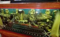 """Thót tim trước chiếc """"bể thủy sinh"""" của hội con nhà giàu chứa đầy rắn, kỳ đà…"""