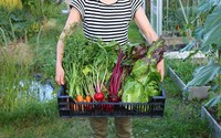 Cô gái thành phố bỏ đại học về ngoại ô trồng rau