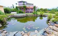 Tiến sĩ Hà Nội cải tạo mảnh đất sỏi đá thành nhà vườn sum suê cây trái