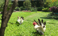 Vườn như 'công viên nhỏ' trên sân thượng gia đình ở TP HCM