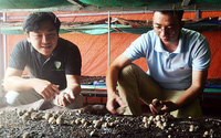 Bộ ba, kẻ cử nhân, người kỹ sư rủ nhau bỏ việc về trồng nấm