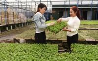 Chỉ ươm rau giống, trồng hoa mà gái đảm thu 3 tỷ/năm