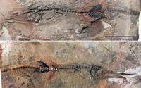 Cậu bé Colombia đi chơi, tìm ra hóa thạch quý 90 triệu tuổi