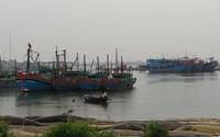 """Huyện Tĩnh Gia (Thanh Hóa): Hàng nghìn ngư dân """"đánh đu"""" theo con nước"""