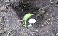 Đặt cả quả trứng xuống đất cùng với một quả chuối chính là bí mật làm vườn siêu tuyệt vời