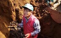 Cách trồng gừng có 1-0-2 của lão nông Nhật Bản, lãi hàng tỷ mỗi năm