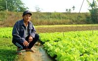 Lão nông thu gần 30 triệu đồng/tháng nhờ trồng rau an toàn