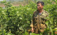Lão nông kiếm 30 triệu đồng/tháng từ nuôi tằm