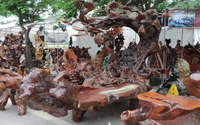 Bộ bàn ghế gỗ táu mật giá nửa tỷ đồng của đại gia Hải Phòng