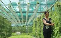 Chị nông dân đa tài thu hàng tỉ đồng mỗi năm từ trồng kiểng treo