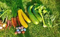 Khu vườn đẹp như tranh vẽ của hai chàng trai yêu thích trồng rau, nuôi gà từ bé