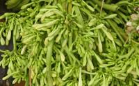 """Những món rau rừng """"đỉnh nhất', ăn là nghiện của vùng Tây Bắc"""