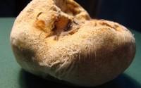 Bí ẩn loài nấm đắt như vàng ròng trên đỉnh Hoàng Liên Sơn