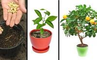 8 loại cây ăn quả có thể trồng từ hạt mà bạn nên trồng trong nhà mình