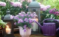 Ban công tràn ngập sắc hè nhờ trang trí với hoa tươi siêu ấn tượng