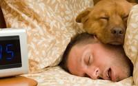 Thói quen ngủ nướng vào cuối tuần hóa ra đem lại tác dụng có lợi không tưởng