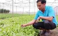 Anh kỹ sư bỏ lương 20 triệu về khai hoang 5ha trồng rau sạch kiếm 50 triệu đồng/tháng