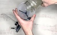 Đừng chỉ lau với nước, bạn phải sử dụng những nguyên liệu sau để khử mùi hôi khủng khiếp của nước tiểu chó, mèo trong nhà