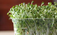 Cách trồng rau mầm tại nhà vừa đơn giản lại có rau sạch ăn cả tuần