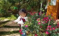 Vì con gái nhỏ, ông bố 8X dốc sức xây nhà gỗ, làm vườn hoa 4000m² giữa lòng Đà Lạt