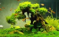 Nhà thêm sang, hết sạch khí độc nhờ những loại cây thủy sinh vừa đẹp vừa dễ chăm