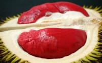 Quả đã cực đắt nhưng cây giống sầu riêng ruột đỏ còn đắt gấp 2 lần
