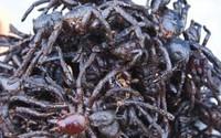 """""""Hết hồn bạt vía"""" đặc sản nhện đen sì- rùng mình nhưng vẫn muốn ăn"""