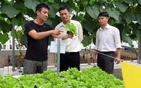 Từng du học Pháp, bỏ việc nhàn ở Sài Gòn về quê trồng rau, lời 50-60 triệu/tháng