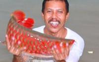 An Giang: Đi thăm đồng bắt được cá thiêng đỏ như máu dài 1,6 mét