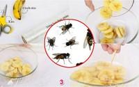 Không cần dùng hóa chất, vẫn diệt được cả đàn ruồi từ rau quả trong vườn