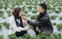 Vườn dâu Tây 4.000 m2 giữa Hà Nội: Truyền tai 1 nơi 'sống ảo'