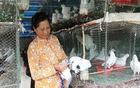 Mỗi tháng thu 30 triệu đồng từ loài chim ấp trứng giả