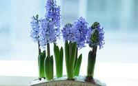 5 loại hoa được