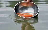 Phóng sinh cá chép làm sao để không mắc nghiệp sát sinh