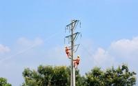 Công ty Điện lực Phú Thọ góp phần tích cực phát triển kinh tế, xã hội ở địa phương