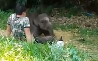 Xúc động khoảnh khắc voi con rúc vào quản tượng vì đồng loại bỏ rơi