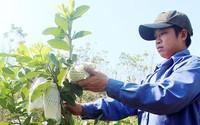 """Chàng trai 9X thu lời 1,5 tỷ/năm nhờ 1 ha vườn trồng """"lung tung"""""""